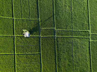 Indonesia, Bali, Aerial view of rice fields - p300m2029822 by Konstantin Trubavin