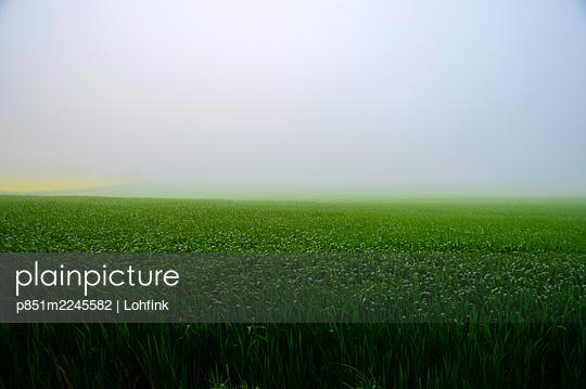Fog over a field - p851m2245582 by Lohfink