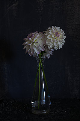 Dahlias in glass bottle - p1470m1540270 by julie davenport