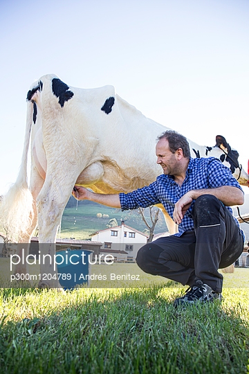 Farmer milking a cow on pasture - p300m1204789 by Andrés Benitez