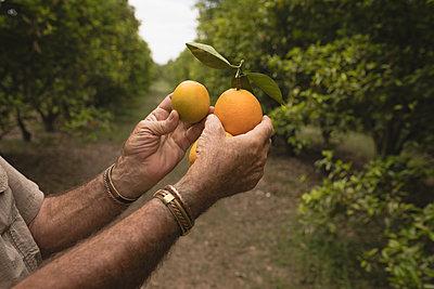 Farmer holding orange fruit in the farm - p1315m1565830 by Wavebreak