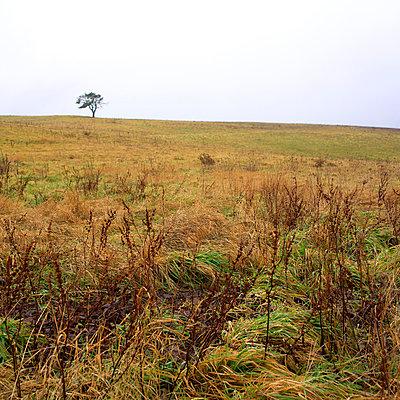 Rural scene - p8130235 by B.Jaubert