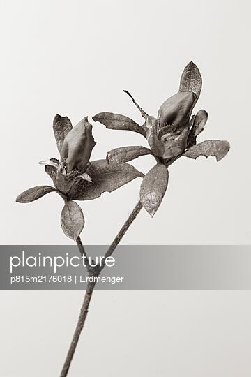 Spring flower - p815m2178018 by Erdmenger