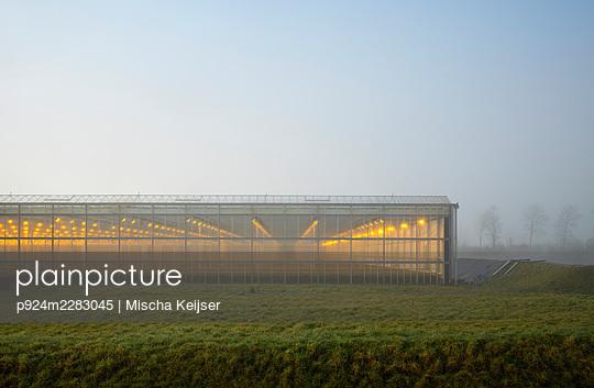 Netherlands, Gelderland, Brakel, Illuminated greenhouse in foggy field - p924m2283045 by Mischa Keijser