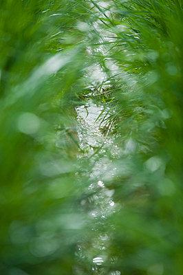 Stream viewed through grass - p624m699453f by Odilon Dimier