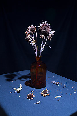 Withered flowers - p1149m2263643 by Yvonne Röder