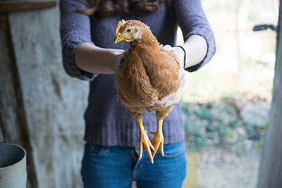 Woman holding a chicken - p300m1355995 by skabarcat