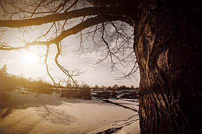 Tree trunk silhouette in winter time with sun flare and blue sky - p968m952948 by Roberto Pastrovicchio