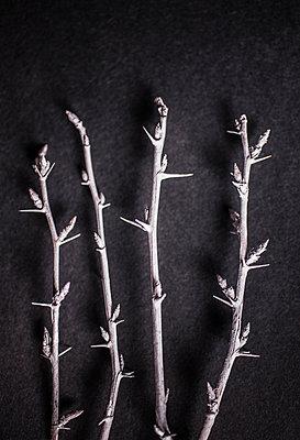 Twigs - p971m989986 by Reilika Landen
