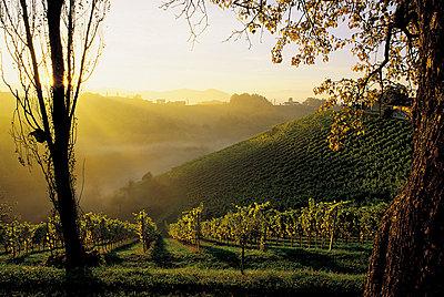 Wine route - p1205m1033044 by Toni Anzenberger