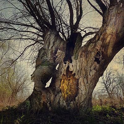 Tree Tales - p1633m2209126 by Bernd Webler