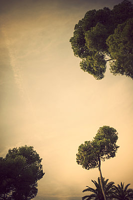 Skyline with tree tops - p970m2073355 by KATYA EVDOKIMOVA