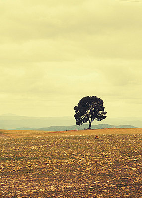 Lonely Tree - p1085m855372 von David Carreno Hansen
