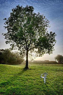 Einzelner Baum auf Wiese - p2270572 von Uwe Nölke