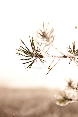 Morgennebel im Moorgebiet - p533m1088387 von Böhm Monika