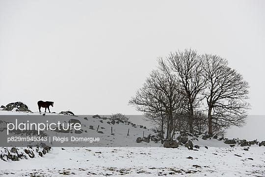 Winter - p829m949343 von Régis Domergue