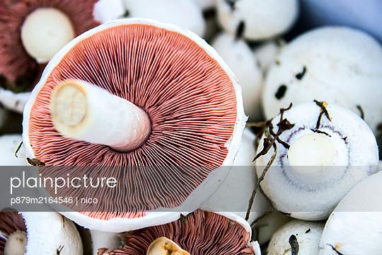 Fresh mushrooms - p879m2164546 by nico