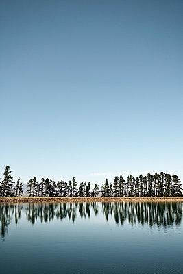 See mit Tannen am Ufer - p1092m2054267 von Rolf Driesen