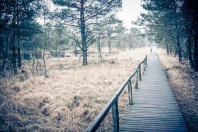 Steg im Moor - p299m1110920 von Silke Heyer