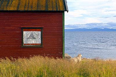p816m745100 von Bjørn Jørgensen