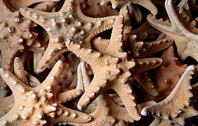 Starfish - p8850054 by Oliver Brenneisen