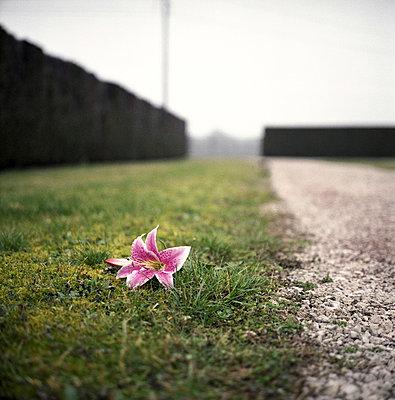 Lilienblüte - p9110507 von Benjamin Roulet