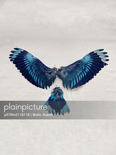 Blue tropical bird wings