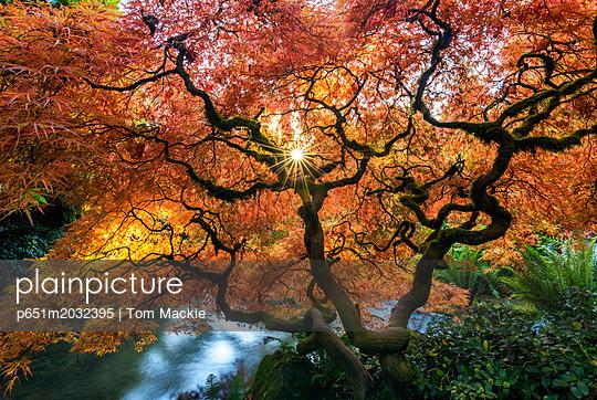 p651m2032395 von Tom Mackie