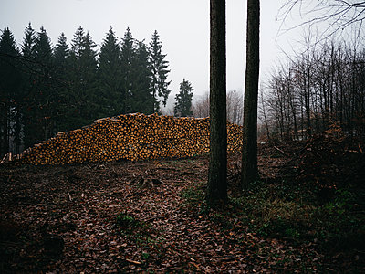 Pile of wood in the forest - p1267m2258002 by Jörg Meier