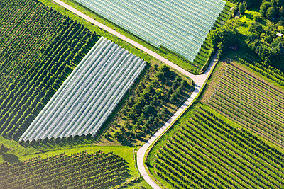 Germany, Baden-Wuerttemberg, Friedrichshafen, aerial view of orchard - p300m977768f by Holger Spiering