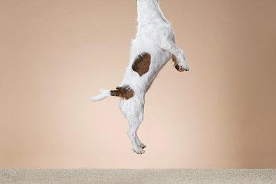 Dog - p4030152 by Helge Sauber