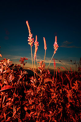 Red plants - p943m2293125 by Do-It-Studios