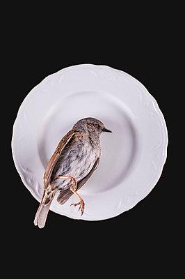 Dead bird on porcelain plate - p971m1332856 by Reilika Landen