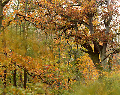 Autumn on Vilm - p1016m792639 by Jochen Knobloch