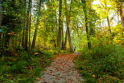Hiker standing in lush forest, Maribel, Wisconsin, USA - p343m1585372 by Tyler D. Rickenbach