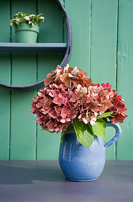 Flower decoration, flour sifter, hortensia in stone jug - p300m2041957 by Gianna Schade