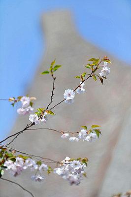 Blühende Zweige - p949m856256 von Frauke Schumann