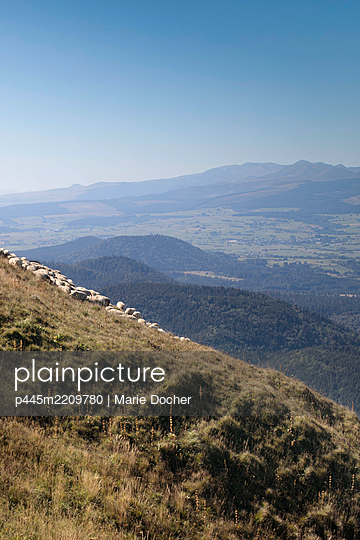Sheeps on a montain - p445m2209780 by Marie Docher