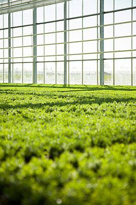 Greenhouse - p902m1031569 by Mölleken