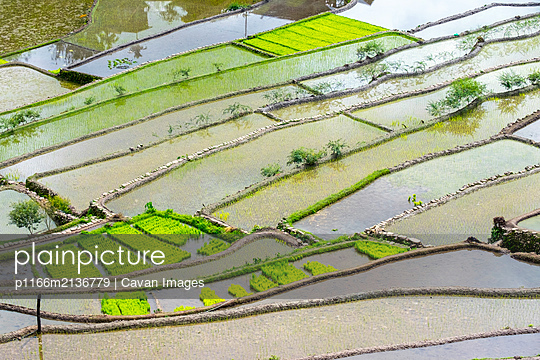 Flooded rice terraces in early spring, Batad, Philippines - p1166m2136779 by Cavan Images