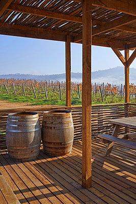 Weinfässer auf einem Weingut - p390m1556470 von Frank Herfort