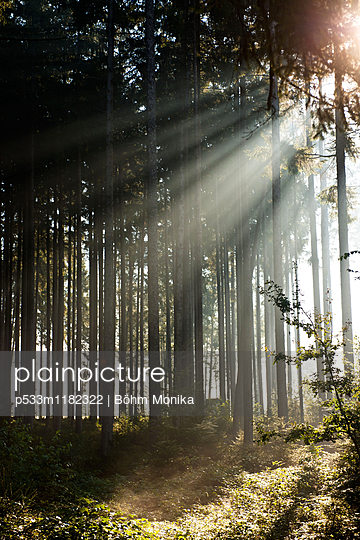 Beams of sunlight - p533m1182322 by Böhm Monika