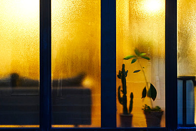 Illuminated window at night - p1312m2184003 by Axel Killian