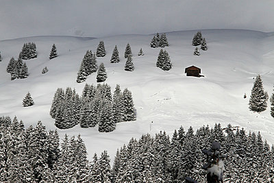 Winter chalet amidst the trees on snowy hill - p30120485f by Gerhard Fitzthum