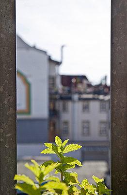 Urban Gardening - p580m951905 by Eva Z. Genthe