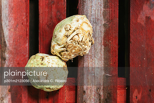 View from above organic celery root on red wooden slats - p301m2123056 by Alexandra C. Ribeiro