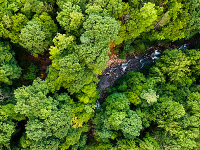 Aerial view of river flowing amidst trees in Pisgah National Forest - p1166m2025143 by Cavan Images