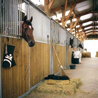 Horse head coming out of stalls - p1610m2185292 by myriam tirler