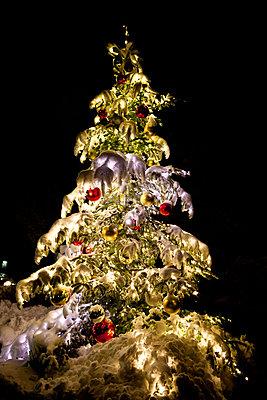 Christmas tree covered with snow - p533m1120335 by Böhm Monika