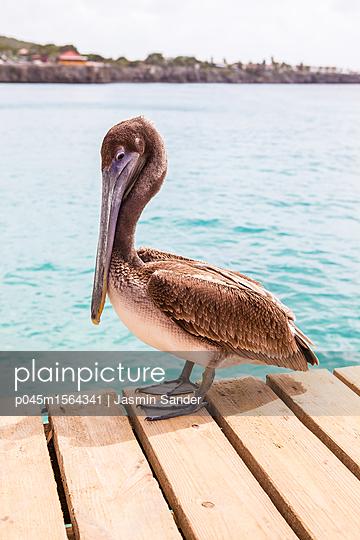Pelikan am Meer - p045m1564341 von Jasmin Sander